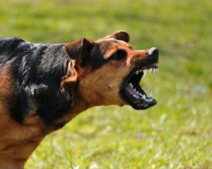 dog bite lawyer st. paul